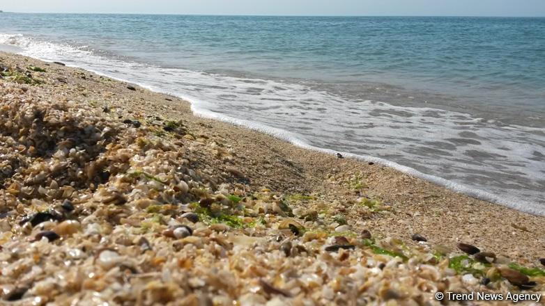 Abşeron yarımadası öz iqlim tipini dəyişir: Yerli floraya aid bəzi bitkilər tükənir